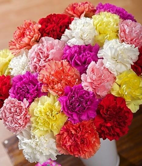 ramo-claveles-colores